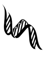 遺伝子構築