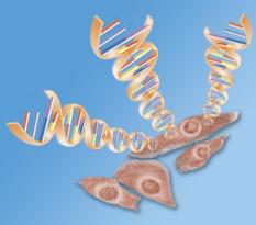 遺伝子導入
