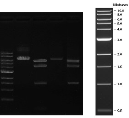 plasmid_03
